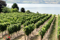 Kelowna Wineries and Vineyards